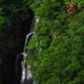 Photos: 山ツツジと三階の滝