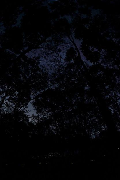 写真: ヒメボタルの森から望む満天の星