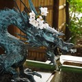 写真: 桜と龍