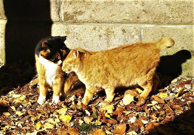 仲良し猫さん