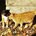 写真: 仲良し猫さん