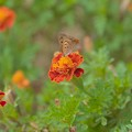 Photos: 花と虫。。。いまいち苦手。。