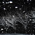 Photos: 雪降る夜