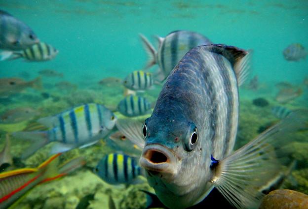 紅海の魚たち2)