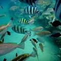 紅海の魚たち3)