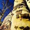 Photos: 街路樹