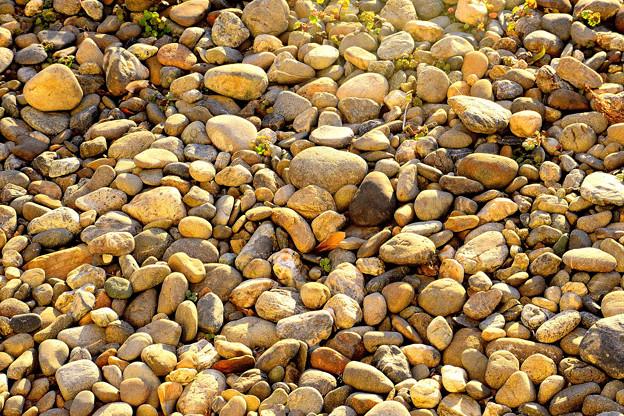 庭の石たち