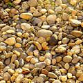 Photos: 庭の石たち