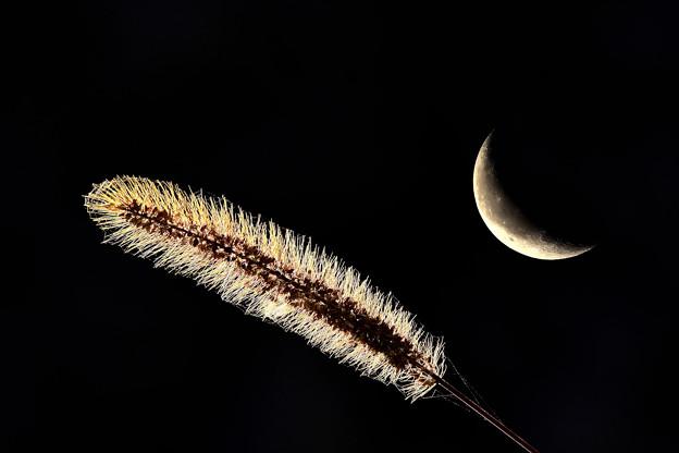 夜のポートレート