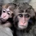Photos: 猿の惑星
