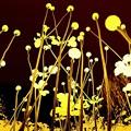 Photos: 黄色い野原