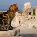 Photos: 史跡の猫