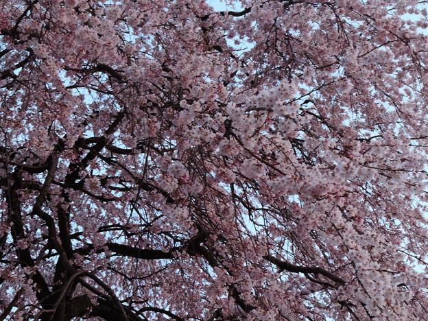 1376 林陽寺の春