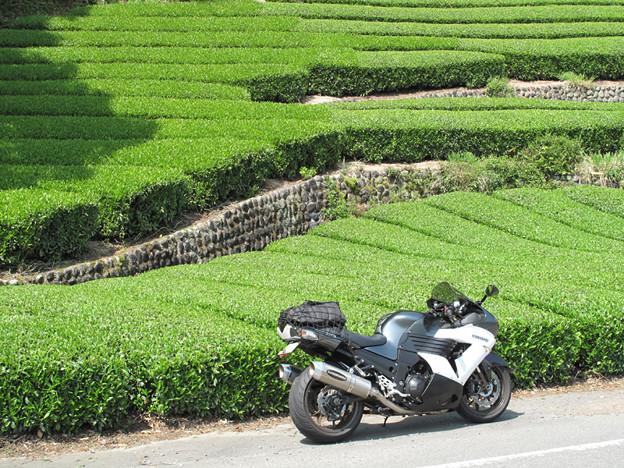 IMG_7878 川根茶畑