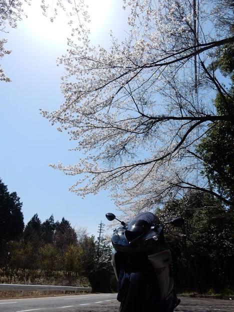 写真: DSCN1861 恵那へと向かう桜の下
