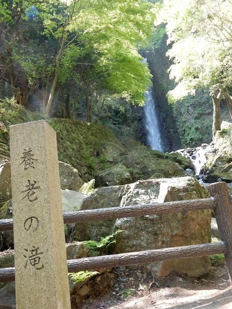 8養老の滝
