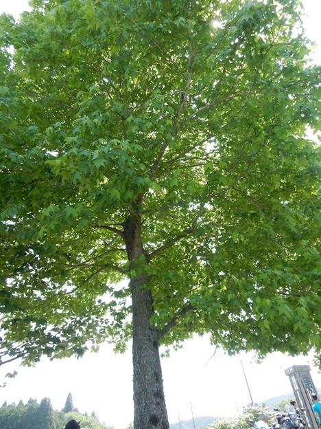 写真: 木陰の気持ち良い季節