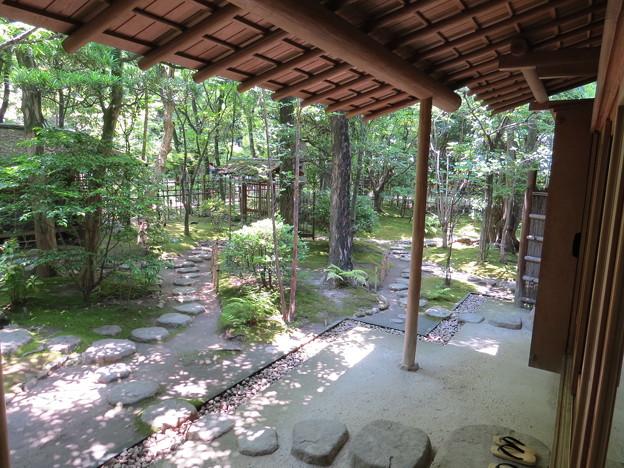 茶室から見た庭園