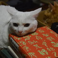 写真: 2018年7月28日のシロちゃん(雌5歳)