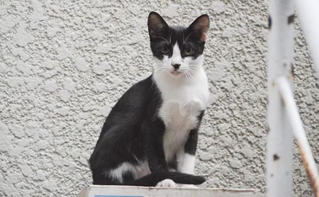 2018年9月8日ここ最近、白黒仔猫が裏庭で暮らすようになった