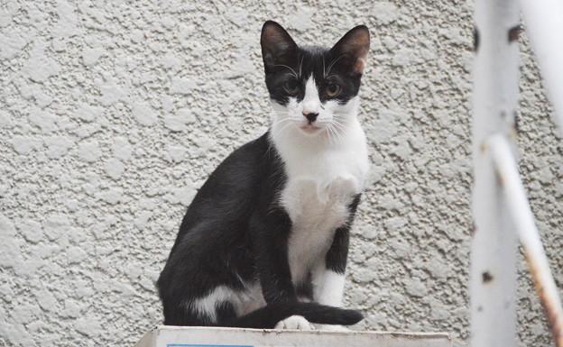 写真: 2018年9月8日ここ最近、白黒仔猫が裏庭で暮らすようになった