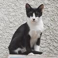 Photos: 2018年9月8日ここ最近、白黒仔猫が裏庭で暮らすようになった