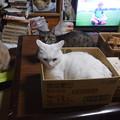 Photos: 令和元年6月22日我が家の天使4匹の勢揃い