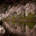 千鳥ヶ淵 夜桜