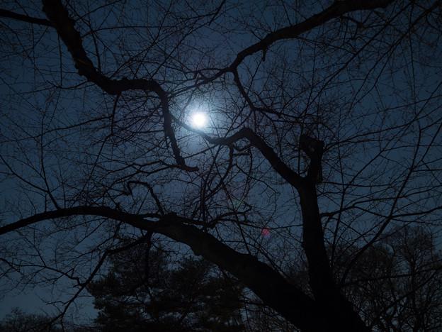 夜があまりに静かだから