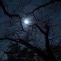 写真: 夜があまりに静かだから