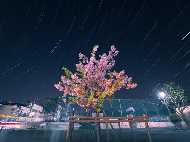 葉桜ぐんぐん!