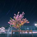 写真: 葉桜ぐんぐん!