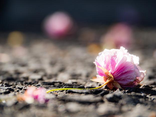 落ち花の色