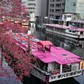 写真: 船與花