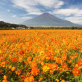 写真: オレンジフレア