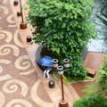 写真: 青い傘
