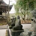 写真: 僧侶の囁き
