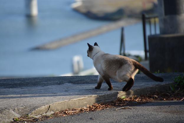 石巻鹿島御児神社の猫4