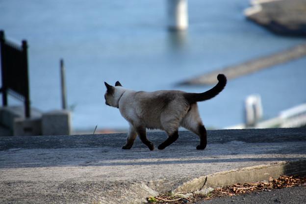 石巻鹿島御児神社の猫5