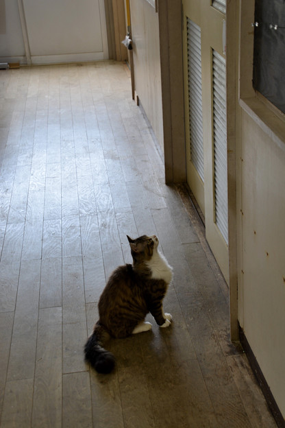 田代島島のえきの猫