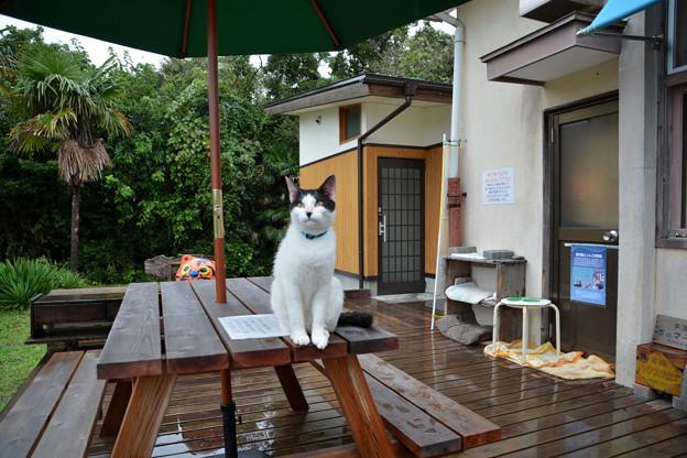 田代島島のえきの猫2