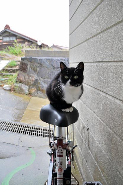 田代島Olive cafe辺りの猫