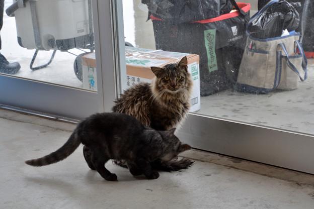 田代島待合所の猫