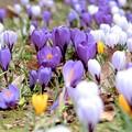 写真: 春は青春の輝きの様に~♪