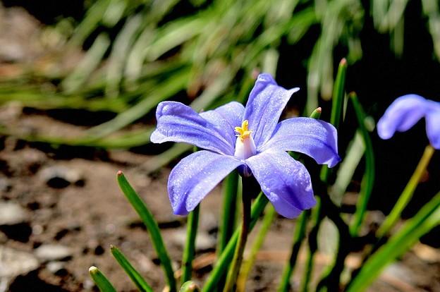 写真: 春はブルーのラメ入りファンデーション~♪