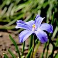 Photos: 春はブルーのラメ入りファンデーション~♪