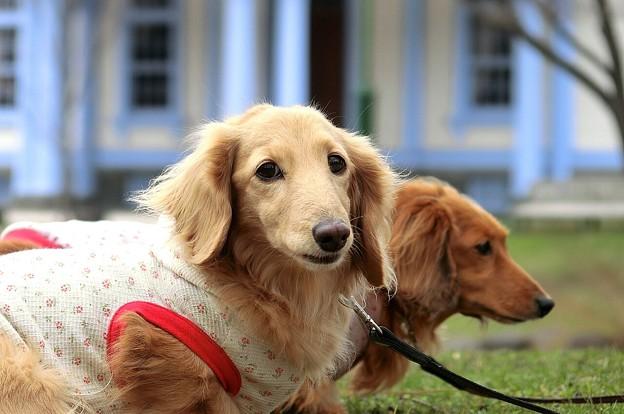 水色の館と愛犬達~♪