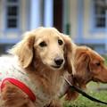 写真: 水色の館と愛犬達~♪