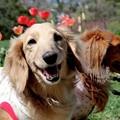 写真: チューリップと素敵な笑顔~♪