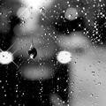 写真: 雨の日は、切なくRainy~Rainy~♪